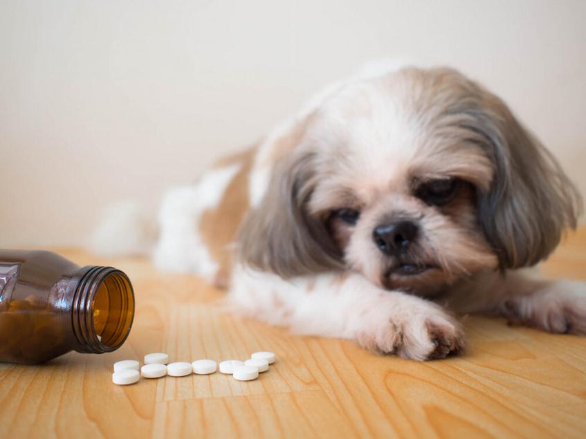 dog and some medication pills