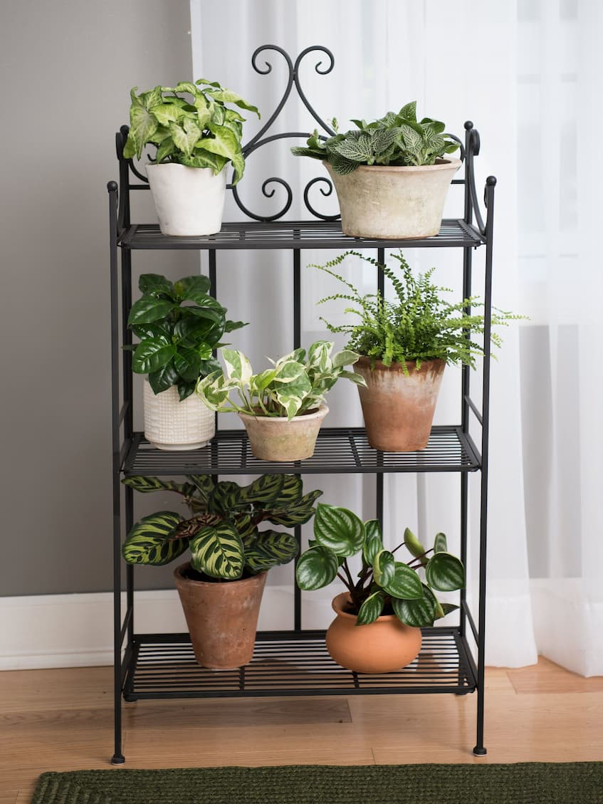 metal shelf with plants